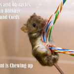 Animals and Obstacles That Can Damage Cables and Cords